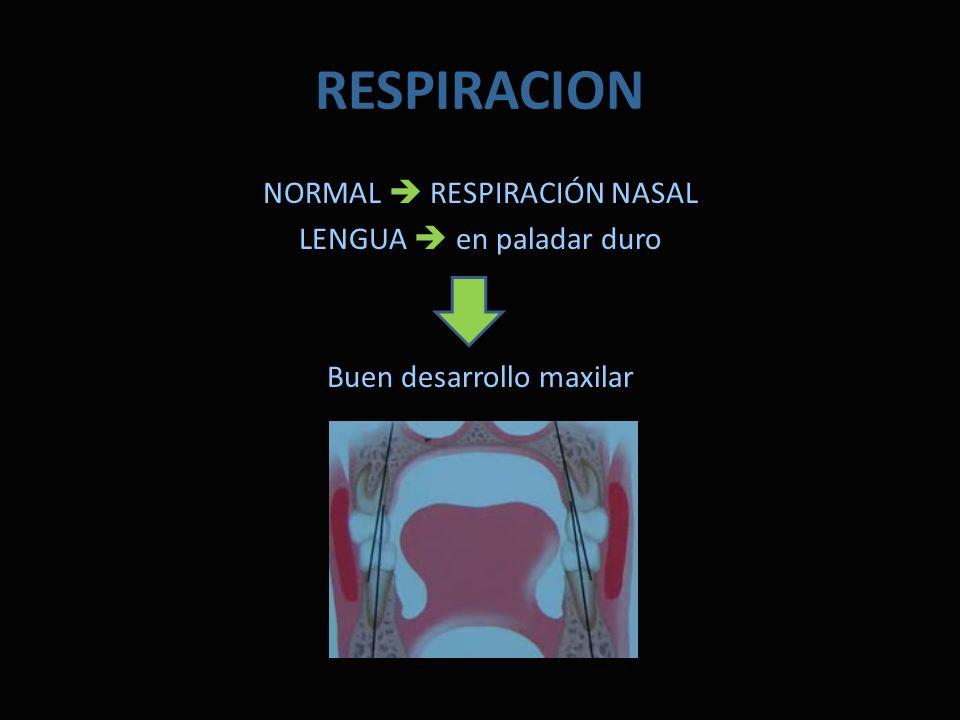 RESPIRACION NORMAL RESPIRACIÓN NASAL LENGUA en paladar duro Buen desarrollo maxilar