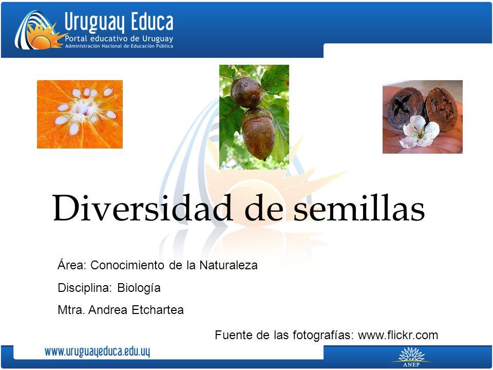 Diversidad de semillas Fuente de las fotografías: www.flickr.com Área: Conocimiento de la Naturaleza Disciplina: Biología Mtra.