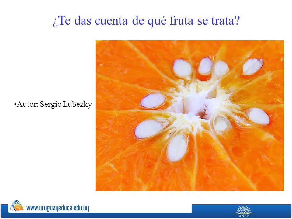 Autor: Sergio Lubezky ¿Te das cuenta de qué fruta se trata?