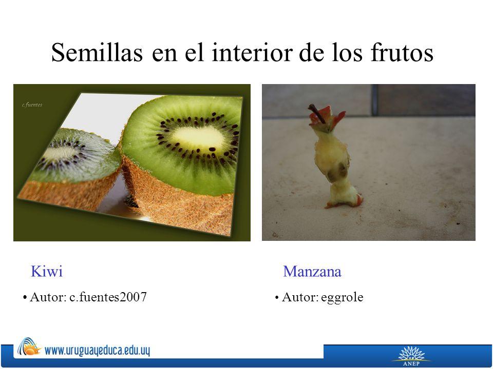Semillas en el interior de los frutos Kiwi Autor: c.fuentes2007 Manzana Autor: eggrole