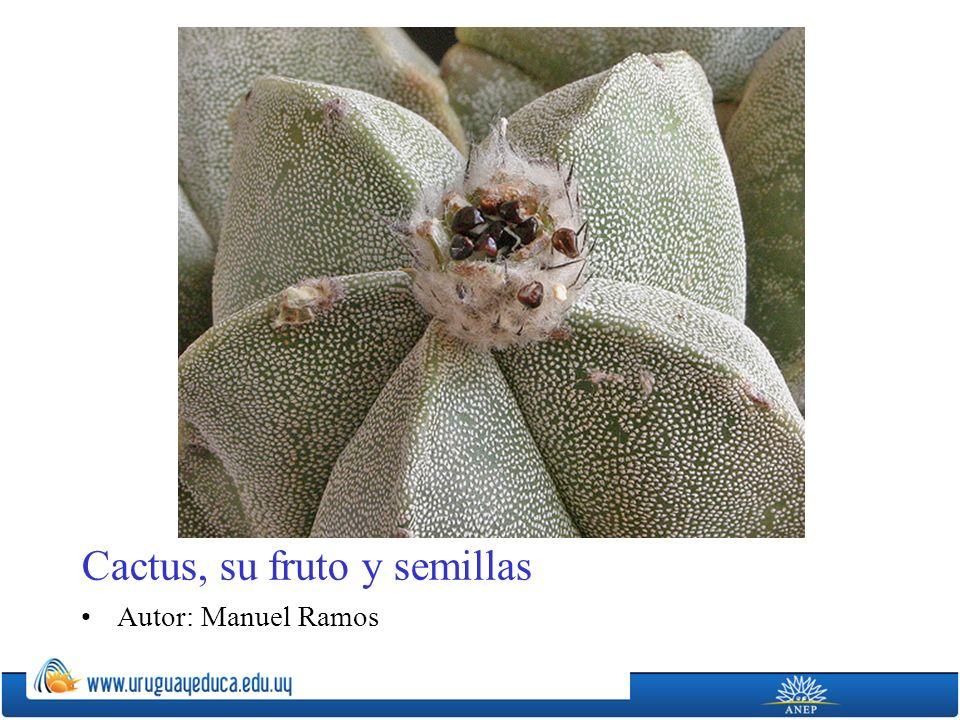 Cactus, su fruto y semillas Autor: Manuel Ramos