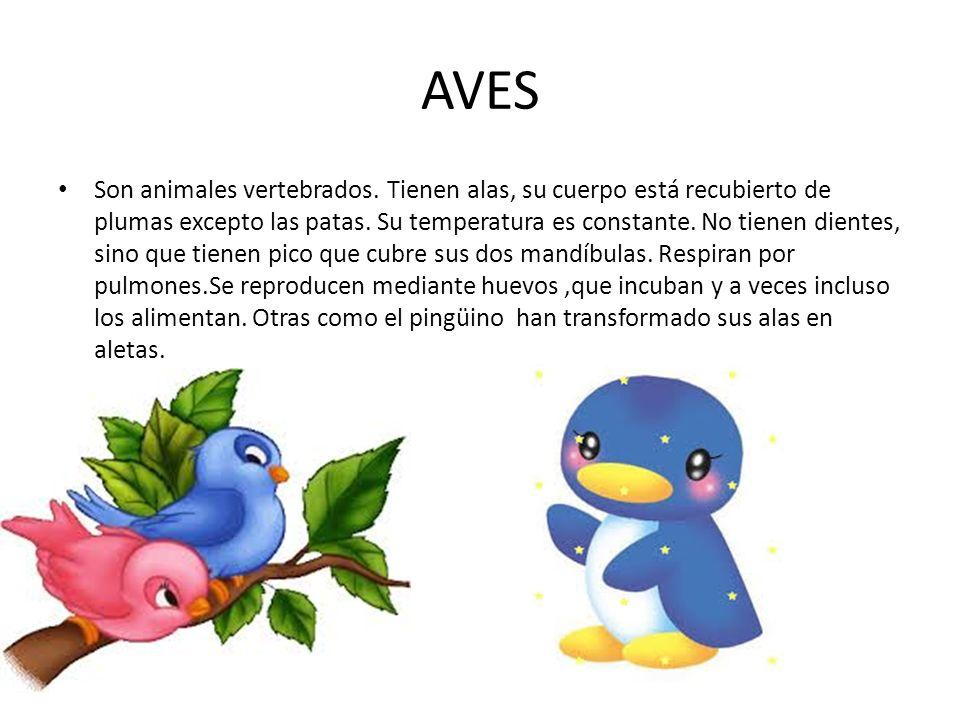AVES Son animales vertebrados.Tienen alas, su cuerpo está recubierto de plumas excepto las patas.