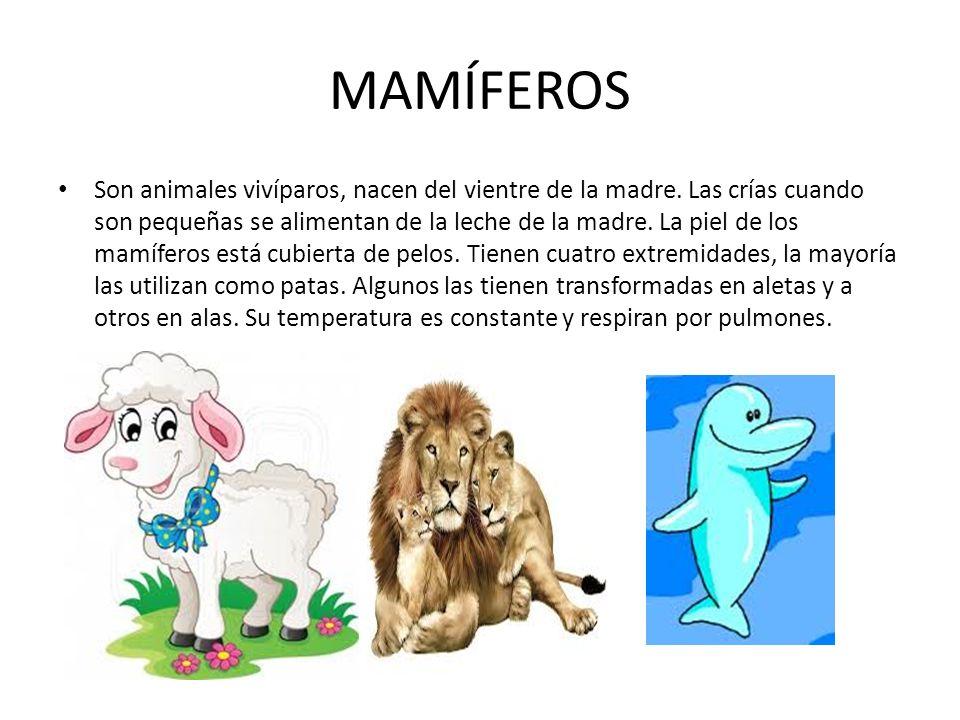 MAMÍFEROS Son animales vivíparos, nacen del vientre de la madre.
