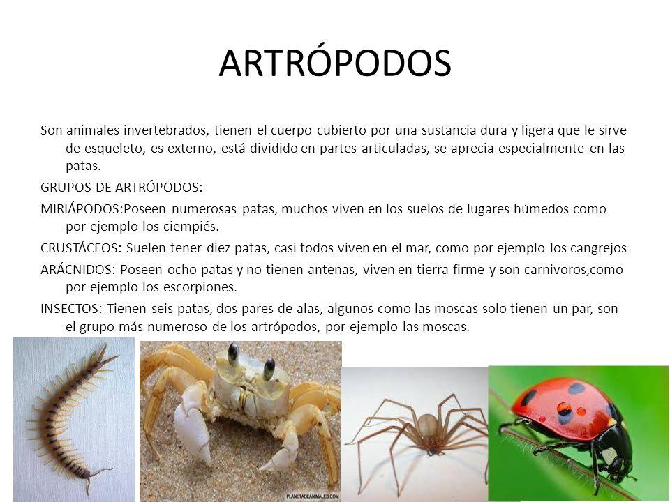 ARTRÓPODOS Son animales invertebrados, tienen el cuerpo cubierto por una sustancia dura y ligera que le sirve de esqueleto, es externo, está dividido en partes articuladas, se aprecia especialmente en las patas.