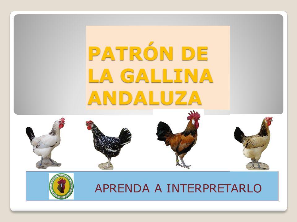 PATRÓN DE LA GALLINA ANDALUZA APRENDA A INTERPRETARLO