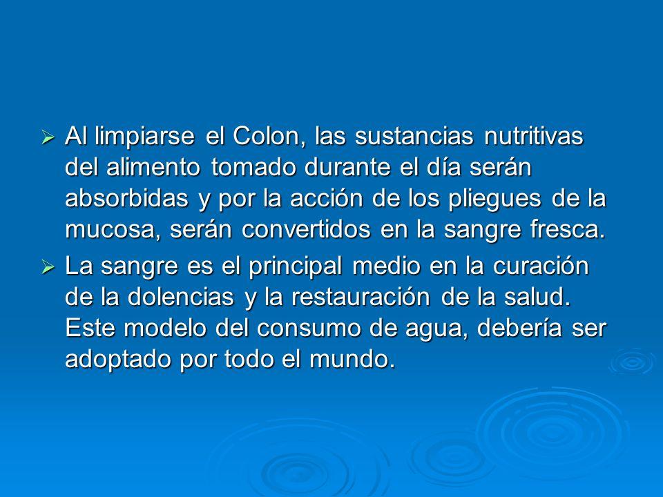 Al limpiarse el Colon, las sustancias nutritivas del alimento tomado durante el día serán absorbidas y por la acción de los pliegues de la mucosa, ser