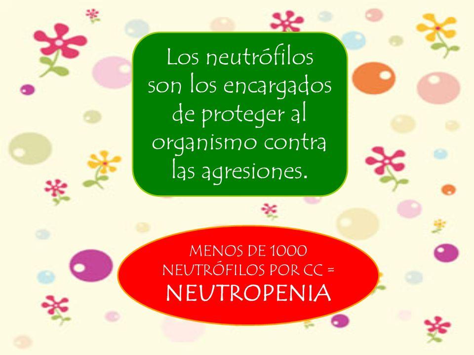 Los neutrófilos son los encargados de proteger al organismo contra las agresiones. MENOS DE 1000 NEUTRÓFILOS POR CC = NEUTROPENIA