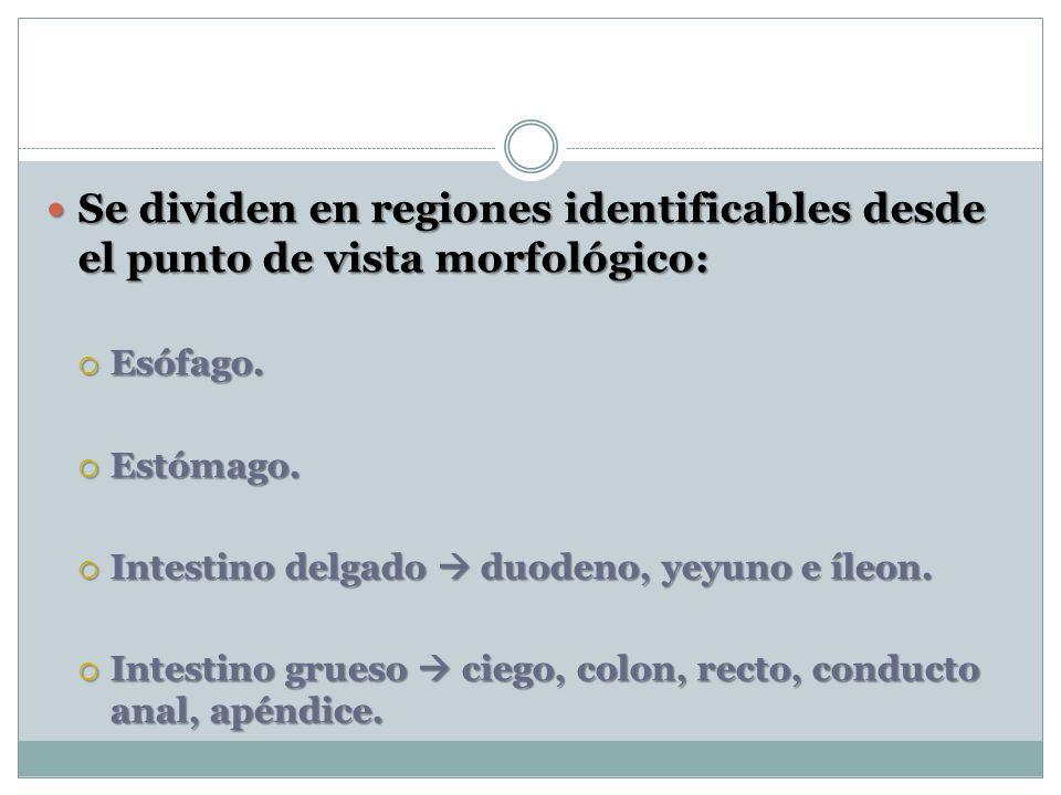Se dividen en regiones identificables desde el punto de vista morfológico: Se dividen en regiones identificables desde el punto de vista morfológico: