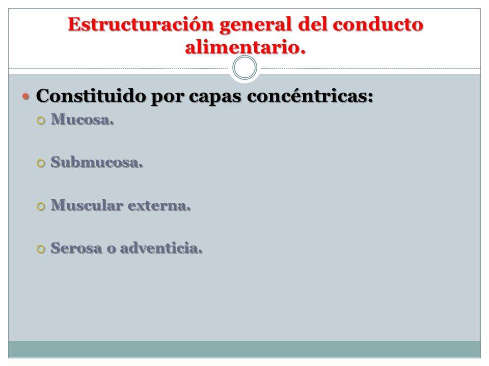 Estructuración general del conducto alimentario. Constituido por capas concéntricas: Constituido por capas concéntricas: Mucosa. Mucosa. Submucosa. Su