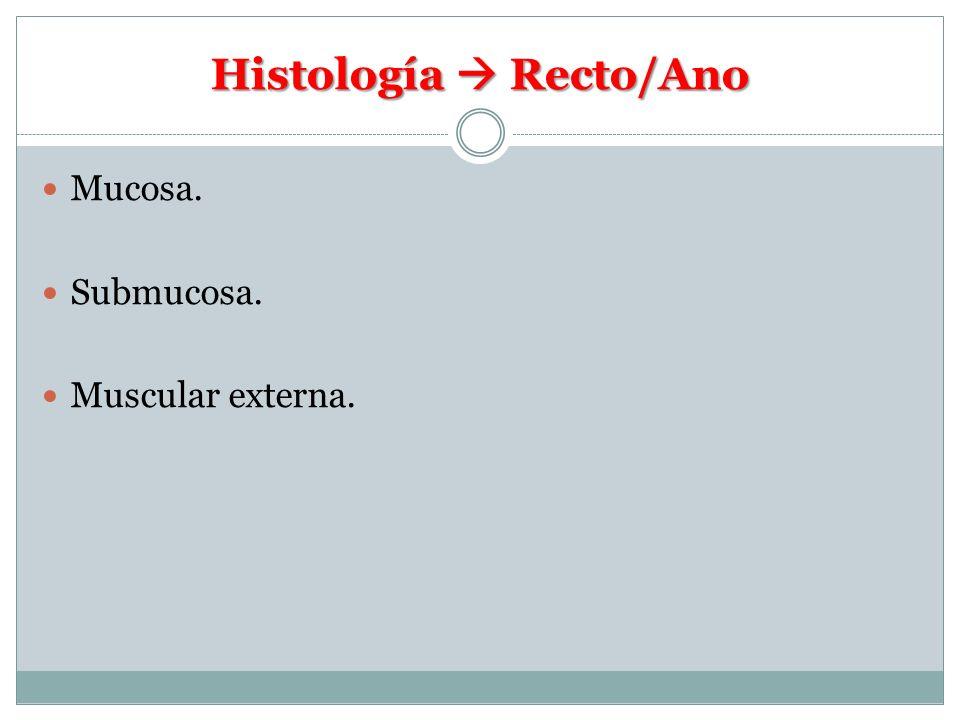 Histología Recto/Ano Mucosa. Submucosa. Muscular externa.