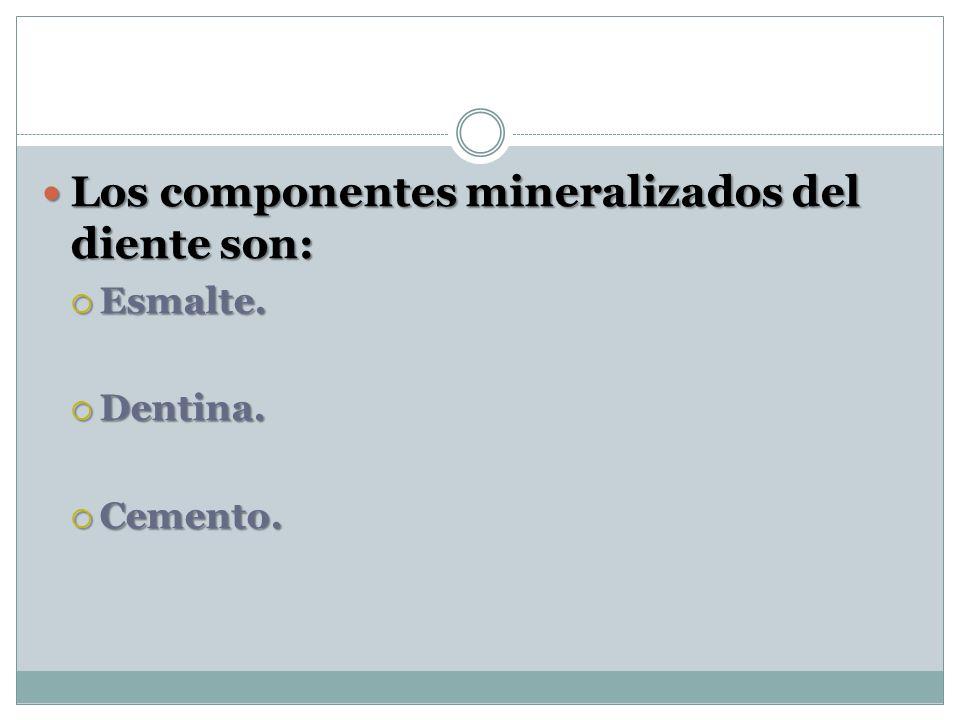 Los componentes mineralizados del diente son: Los componentes mineralizados del diente son: Esmalte. Esmalte. Dentina. Dentina. Cemento. Cemento.
