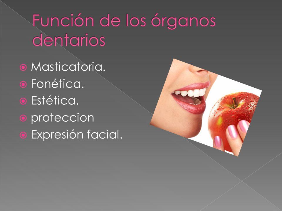 Masticatoria. Fonética. Estética. proteccion Expresión facial.