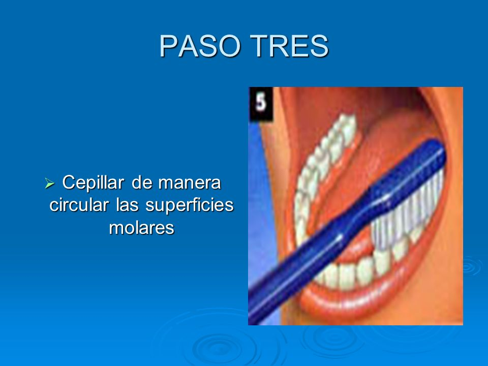 PASO TRES Cepillar de manera circular las superficies molares Cepillar de manera circular las superficies molares