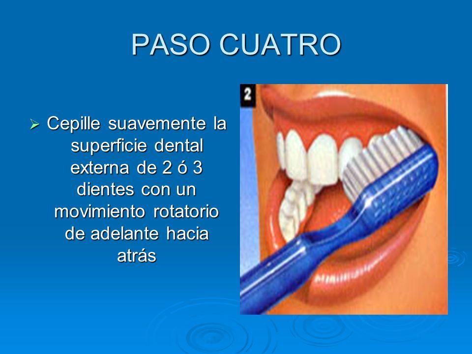 PASO CUATRO Cepille suavemente la superficie dental externa de 2 ó 3 dientes con un movimiento rotatorio de adelante hacia atrás Cepille suavemente la