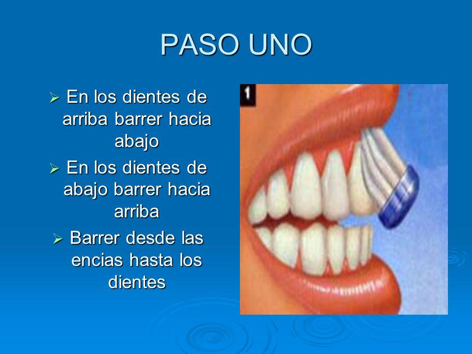 PASO UNO En los dientes de arriba barrer hacia abajo En los dientes de arriba barrer hacia abajo En los dientes de abajo barrer hacia arriba En los di