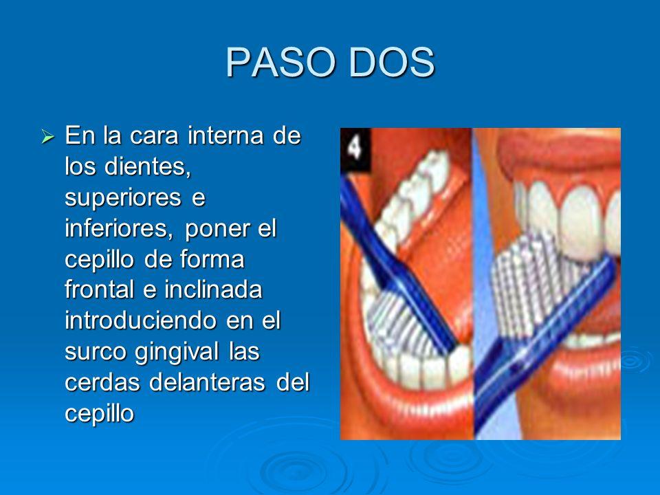 PASO DOS En la cara interna de los dientes, superiores e inferiores, poner el cepillo de forma frontal e inclinada introduciendo en el surco gingival