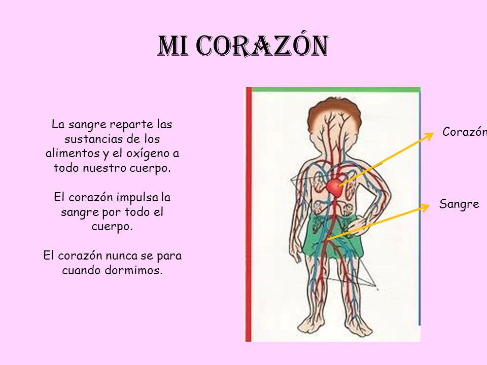 MI CORAZÓN Corazón Sangre La sangre reparte las sustancias de los alimentos y el oxígeno a todo nuestro cuerpo. El corazón impulsa la sangre por todo