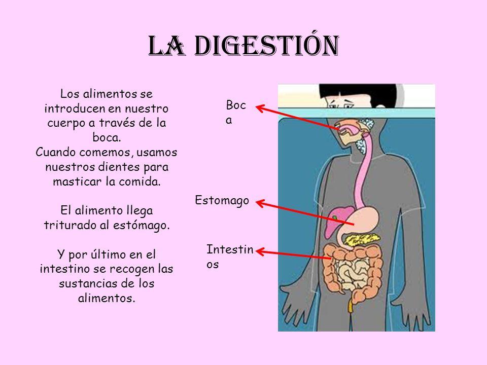 LA DIGESTIÓN Boc a Estomago Intestin os Los alimentos se introducen en nuestro cuerpo a través de la boca. Cuando comemos, usamos nuestros dientes par