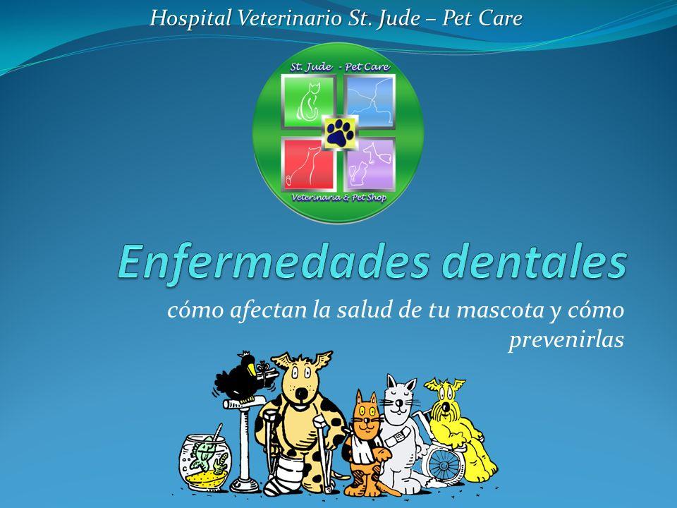 cómo afectan la salud de tu mascota y cómo prevenirlas Hospital Veterinario St. Jude – Pet Care