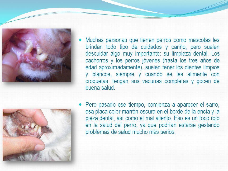 Muchas personas que tienen perros como mascotas les brindan todo tipo de cuidados y cariño, pero suelen descuidar algo muy importante: su limpieza dental.