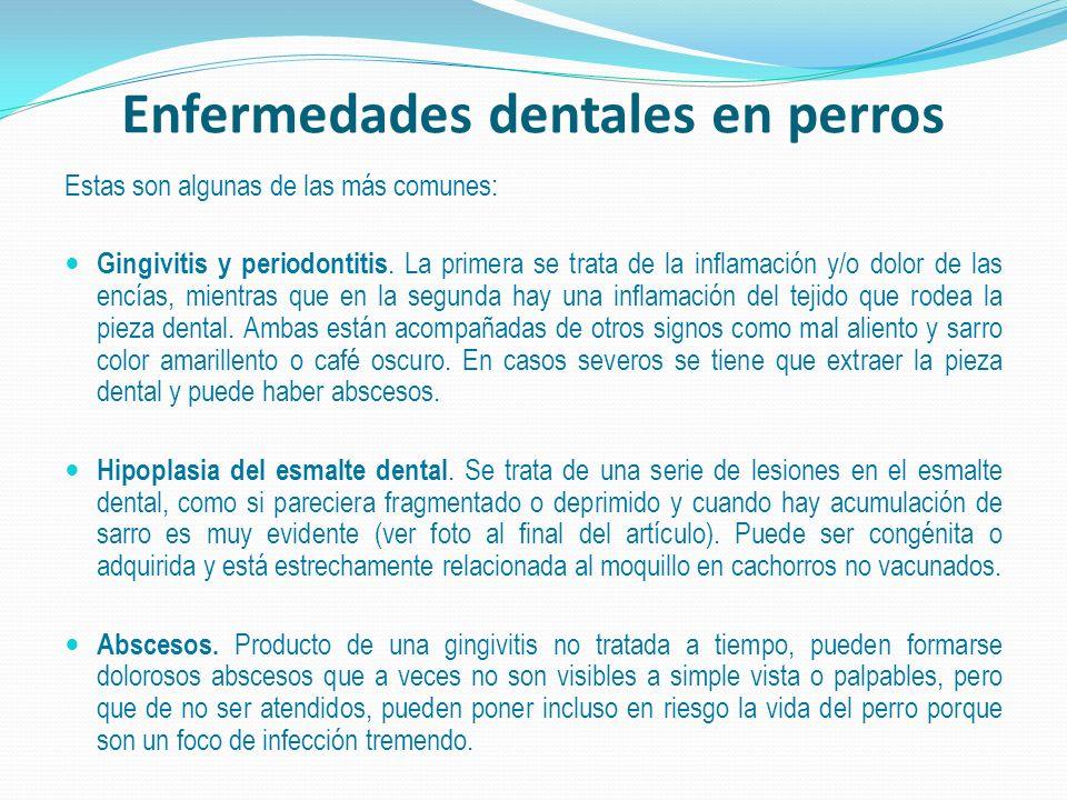 Enfermedades dentales en perros Estas son algunas de las más comunes: Gingivitis y periodontitis. La primera se trata de la inflamación y/o dolor de l