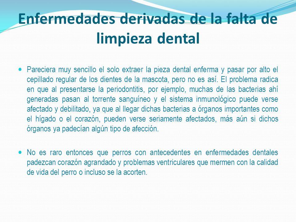 Enfermedades derivadas de la falta de limpieza dental Pareciera muy sencillo el solo extraer la pieza dental enferma y pasar por alto el cepillado regular de los dientes de la mascota, pero no es así.