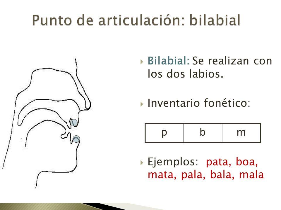 Bilabial: Se realizan con los dos labios. Inventario fonético: Ejemplos: pata, boa, mata, pala, bala, mala pbm