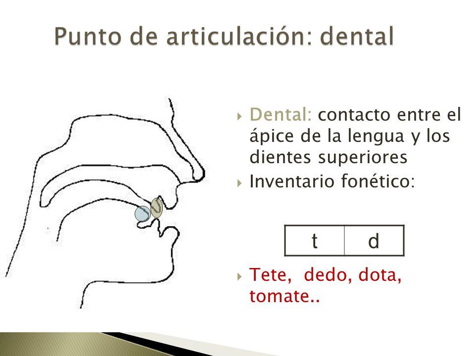 Dental: contacto entre el ápice de la lengua y los dientes superiores Inventario fonético: Tete, dedo, dota, tomate.. td