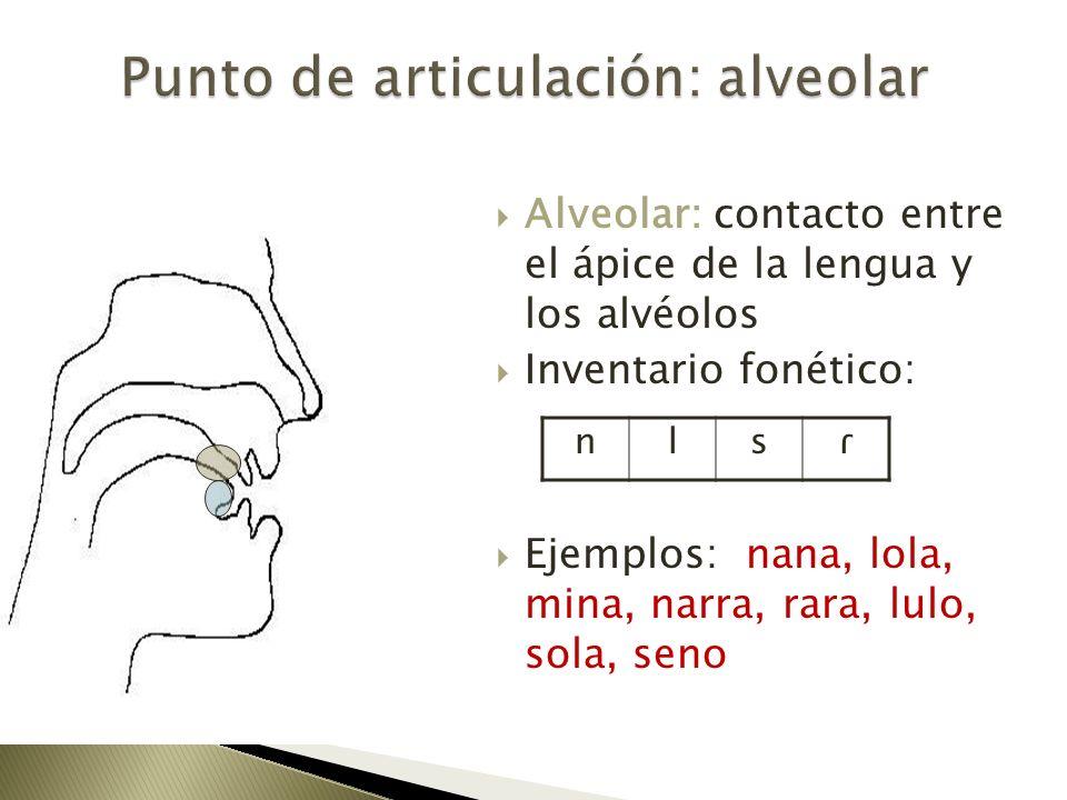 Alveolar: contacto entre el ápice de la lengua y los alvéolos Inventario fonético: Ejemplos: nana, lola, mina, narra, rara, lulo, sola, seno nlsɾ