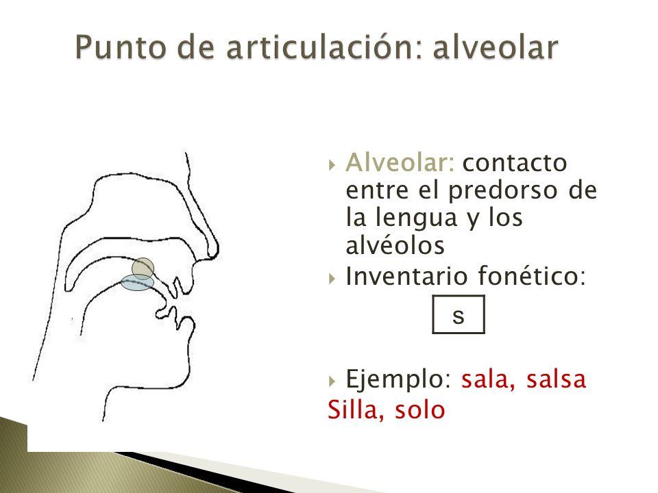 Alveolar: contacto entre el predorso de la lengua y los alvéolos Inventario fonético: Ejemplo: sala, salsa Silla, solo s