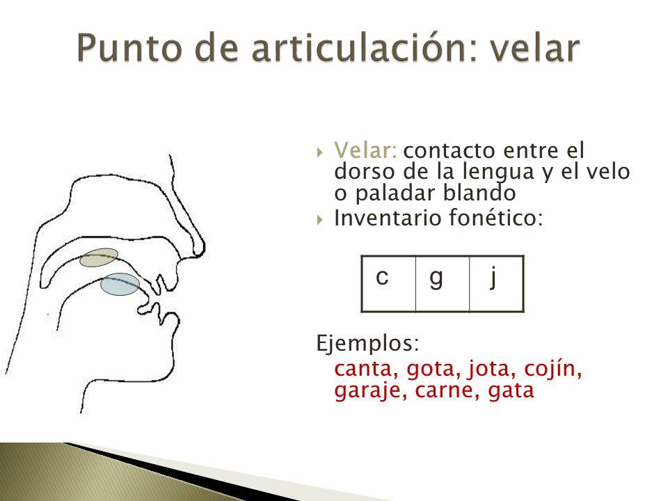 Velar: contacto entre el dorso de la lengua y el velo o paladar blando Inventario fonético: Ejemplos: canta, gota, jota, cojín, garaje, carne, gata c