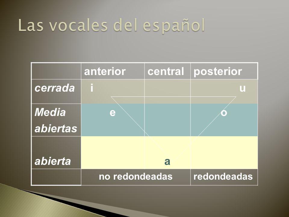 anteriorcentralposterior cerrada i u Media abiertas eo abiertaa no redondeadasredondeadas