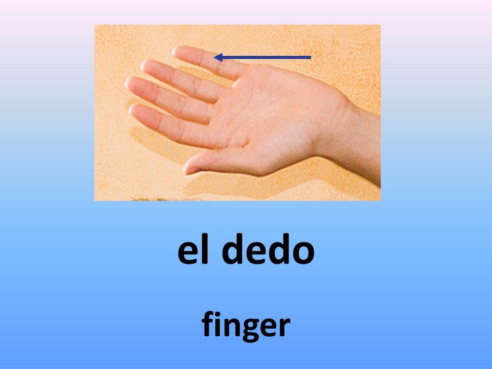 el dedo finger