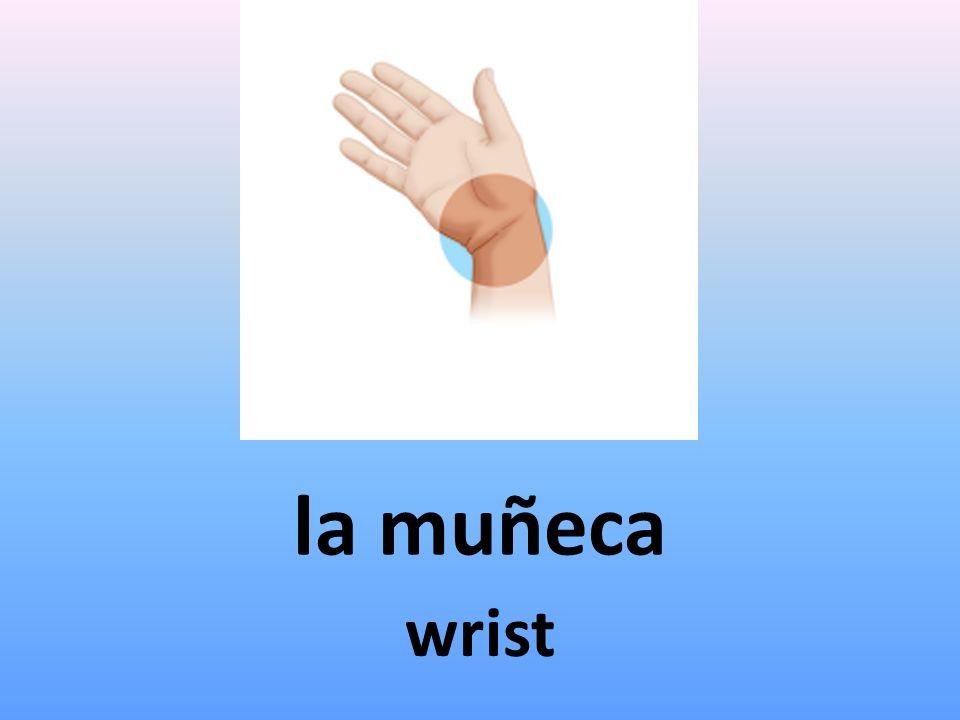 la muñeca wrist