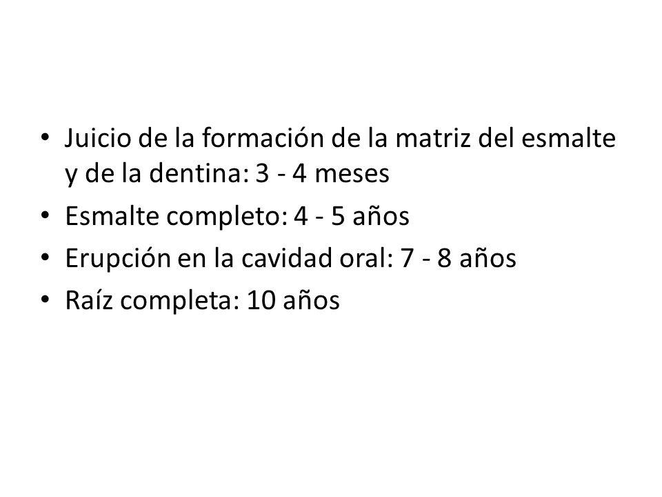 Juicio de la formación de la matriz del esmalte y de la dentina: 3 - 4 meses Esmalte completo: 4 - 5 años Erupción en la cavidad oral: 7 - 8 años Raíz