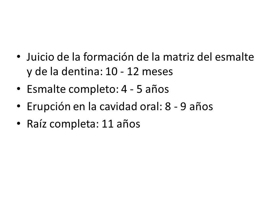 Juicio de la formación de la matriz del esmalte y de la dentina: 10 - 12 meses Esmalte completo: 4 - 5 años Erupción en la cavidad oral: 8 - 9 años Ra