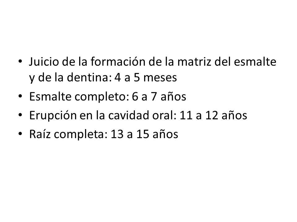 Juicio de la formación de la matriz del esmalte y de la dentina: 4 a 5 meses Esmalte completo: 6 a 7 años Erupción en la cavidad oral: 11 a 12 años Ra