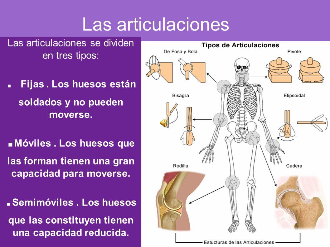 Las articulaciones Las articulaciones se dividen en tres tipos:. Fijas. Los huesos están soldados y no pueden moverse.. Móviles. Los huesos que las fo