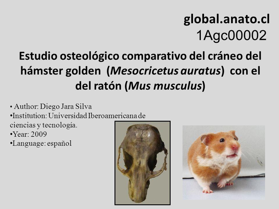 Estudio osteológico comparativo del cráneo del hámster golden (Mesocricetus auratus) con el del ratón (Mus musculus) global.anato.cl 1Agc00002 Author:
