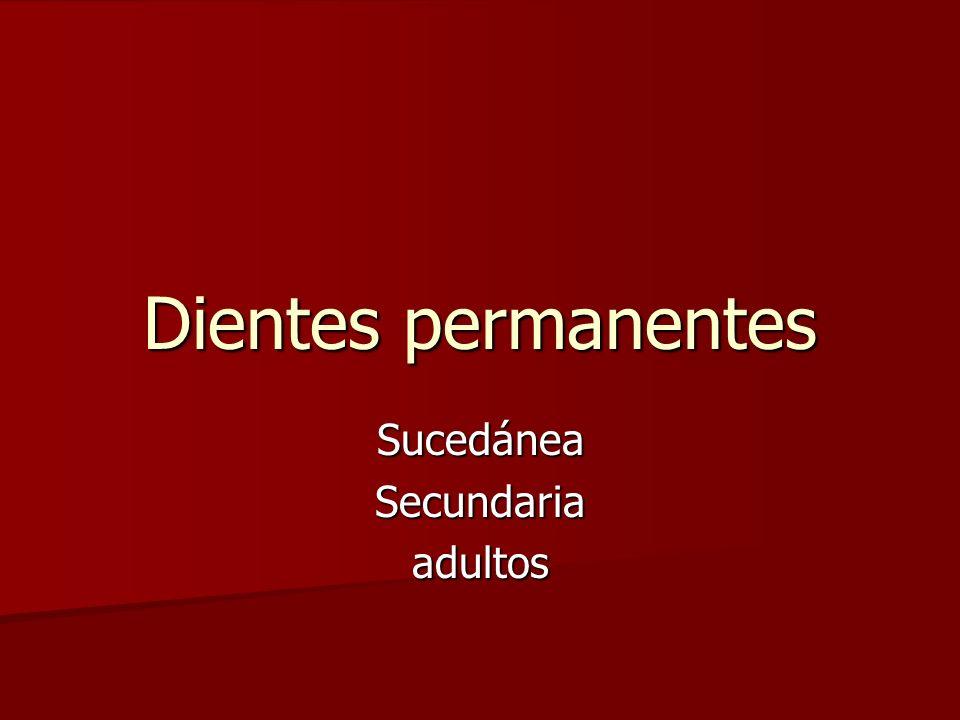 Dientes permanentes SucedáneaSecundariaadultos