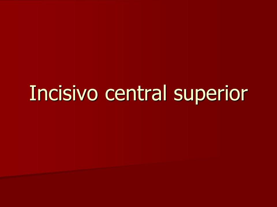 Incisivo central superior