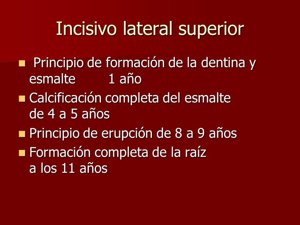 Principio de formación de la dentina y esmalte1 año Principio de formación de la dentina y esmalte1 año Calcificación completa del esmalte de 4 a 5 años Calcificación completa del esmalte de 4 a 5 años Principio de erupción de 8 a 9 años Principio de erupción de 8 a 9 años Formación completa de la raíz a los 11 años Formación completa de la raíz a los 11 años