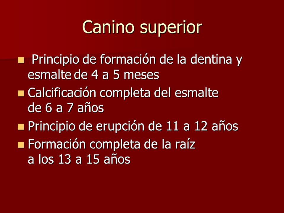 Principio de formación de la dentina y esmaltede 4 a 5 meses Principio de formación de la dentina y esmaltede 4 a 5 meses Calcificación completa del e