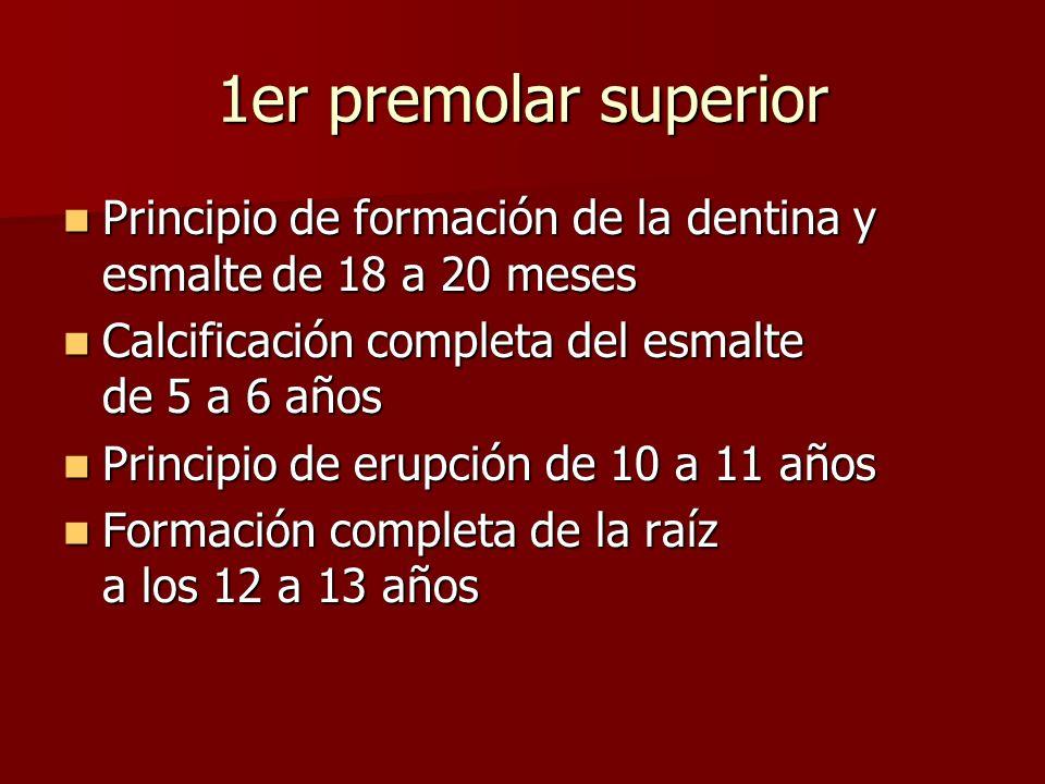 1er premolar superior Principio de formación de la dentina y esmaltede 18 a 20 meses Principio de formación de la dentina y esmaltede 18 a 20 meses Ca