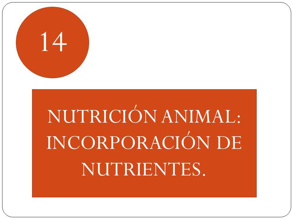 14 NUTRICIÓN ANIMAL: INCORPORACIÓN DE NUTRIENTES.
