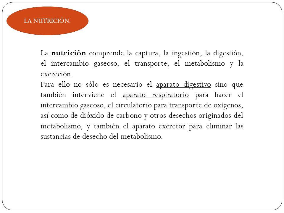 LA NUTRICIÓN. La nutrición comprende la captura, la ingestión, la digestión, el intercambio gaseoso, el transporte, el metabolismo y la excreción. Par