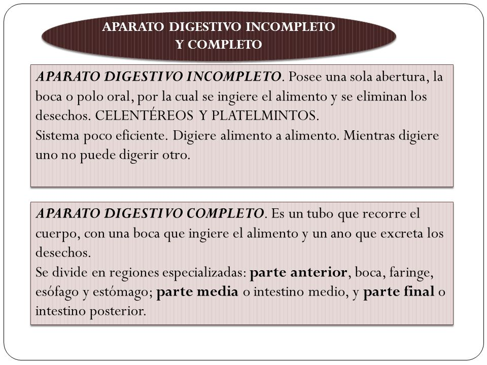 APARATO DIGESTIVO INCOMPLETO Y COMPLETO APARATO DIGESTIVO INCOMPLETO.