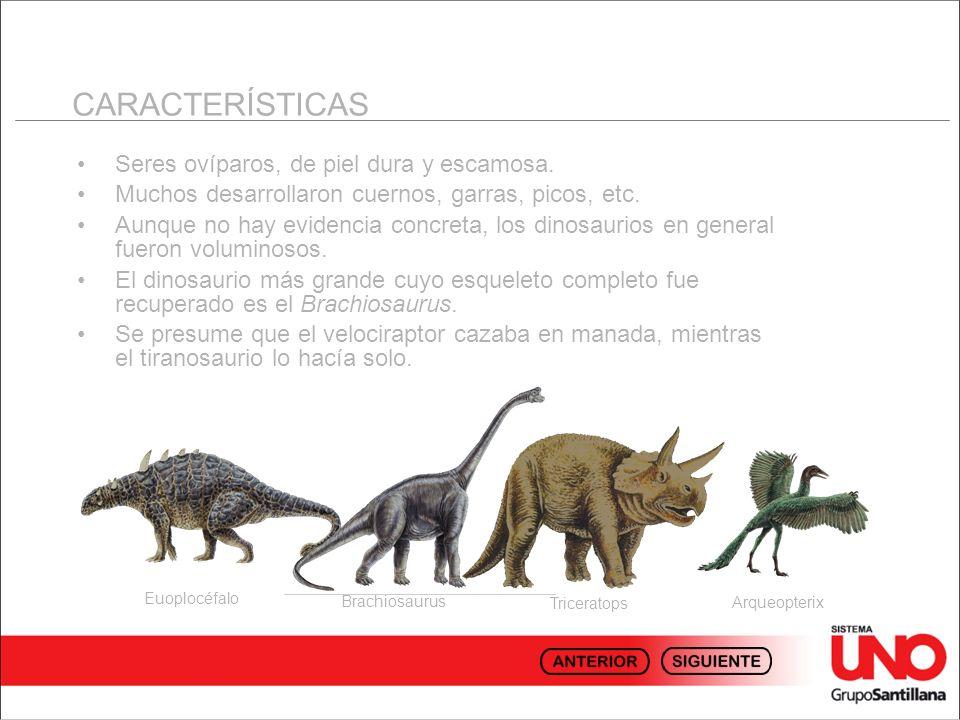 CLASIFICACIÓN Ornistiquios Ornitópodos.Vivieron más tiempo que otro.