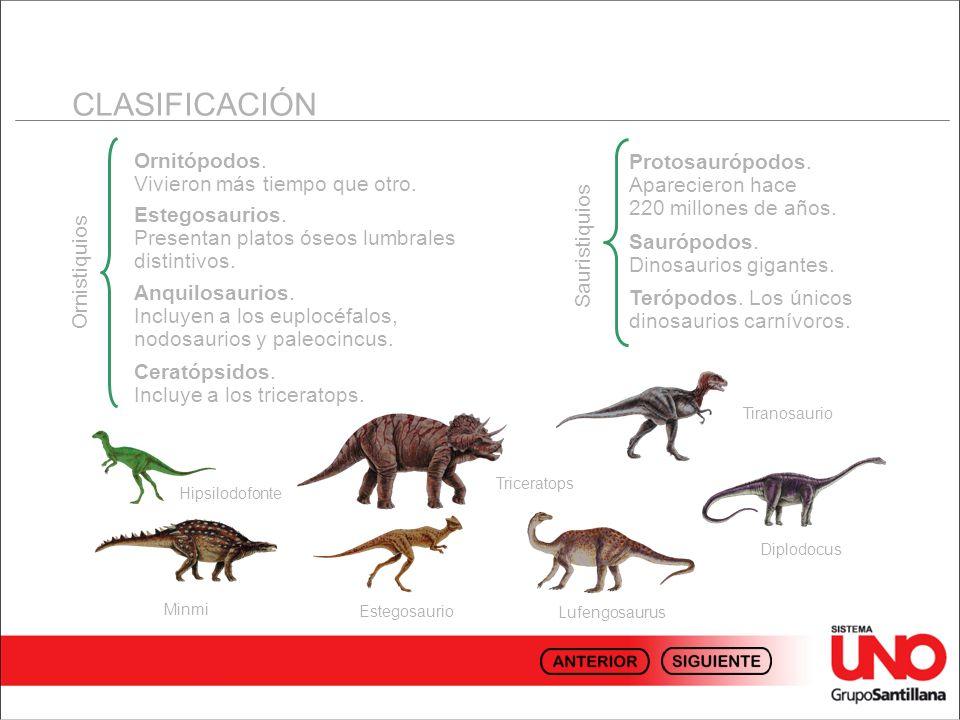CLASIFICACIÓN Ornistiquios Ornitópodos. Vivieron más tiempo que otro. Estegosaurios. Presentan platos óseos lumbrales distintivos. Anquilosaurios. Inc