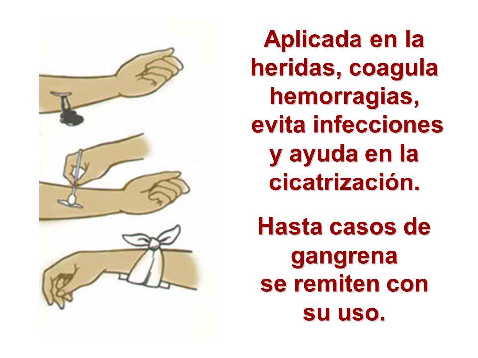 Aplicada en la heridas, coagula hemorragias, evita infecciones y ayuda en la cicatrización. evita infecciones y ayuda en la cicatrización. Hasta casos